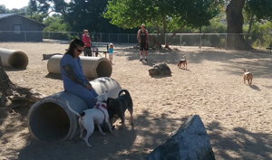Photograph of dogs and owners enjoying a spell at the dog park in Fuji Park