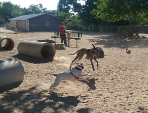 Photograph of dogs playing at Fuji Dog Park, Carson City, courtesy Vern Krahn,    Parks Planner